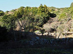 木田牧場の奥にある棚田跡(鳥羽市河内町)
