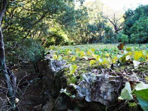 河内川の対岸の棚田跡、木田牧場〜河内ダム(鳥羽市河内町)