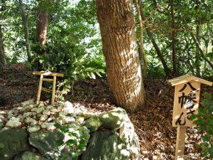 新たに巻かれた八幡さんの榊巻、松下社(伊勢市二見町松下)