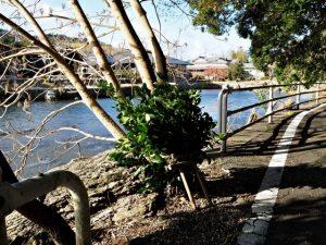 新たに巻かれた松下社に隣接する池の辺りの榊巻(伊勢市二見町松下)