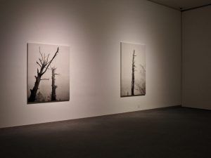 Room4 藤原康博(企画展「パラランドスケープ」@三重県立美術館)