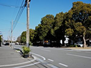 JR参宮線山田上口駅前のクスノキ並木通り
