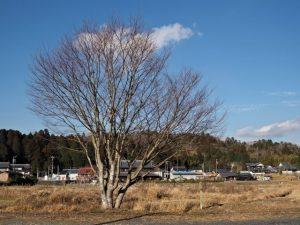 伊賀焼伝統産業会館前からの眺望(伊賀市丸柱)