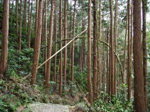 神前神社(皇大神宮 摂社)の参道