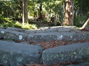 夫婦杉付近の石畳(熊野古道 大門坂)
