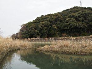 朝熊川の対岸から望む朝熊神社(皇大神宮 摂社)の社叢