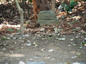 大修繕にて古殿地の中心からこの場所へ移動されたままの石、河原神社(豊受大神宮 摂社)