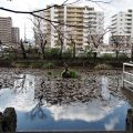 船江上社で横たえられていたのはここに建っていた朧ヶ池の鳥居