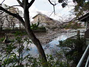 船江上社の朧ヶ池(伊勢市河崎)