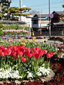 みやざき花畑(伊勢市岡本町)