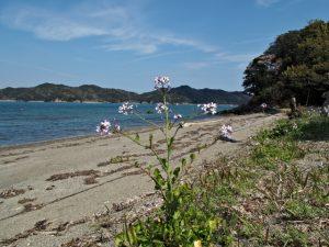 旅荘 海の蝶のプライベートビーチ