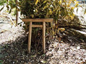 小鳥居を取り戻した榊巻、松下社に隣接する池のほとり(伊勢市二見町松下)