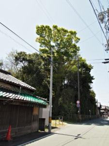 狭田国生神社(皇大神宮 摂社)の社叢