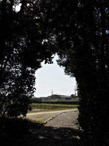 川原神社(皇大神宮 摂社)の社窓風景