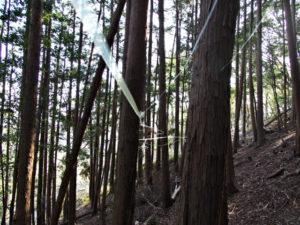 ゆすり岩付近、赤井山(伊勢市上野町)