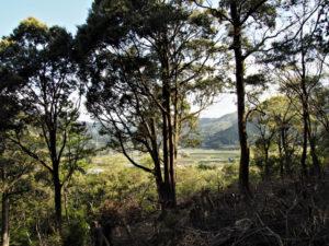 檜山付近からの眺望、赤井山(伊勢市上野町)