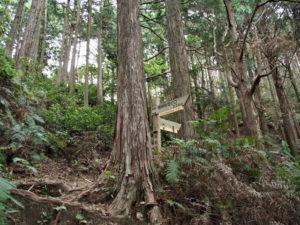 三浦峠へ(熊ヶ谷道)