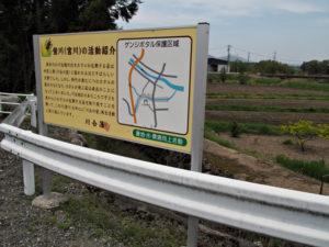 川合橋[4](員弁川)付近のゲンジボタル保護区域等の説明板(濃州道)