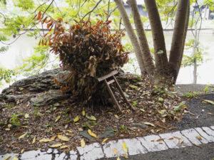 榊巻と小鳥居、松下社に隣接する池のほとり(伊勢市二見町松下)