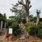 バッサリと切られていた正念僧・人柱供養碑塚の大樹(度会郡玉城町上田辺)