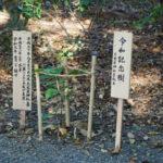 令和記念樹・クルミの木、志宝屋神社(豊受大神宮 末社)