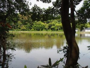 茜社(伊勢市豊川町)付近から望む勾玉池