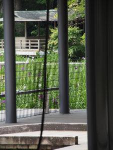 せんぐう館 休憩舎付近から遠望した勾玉池の菖蒲園(外宮)