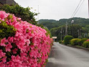 堅田神社(皇大神宮 摂社)の社叢遠望