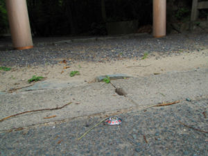 鳥居前の道路脇に打たれていた3級基準点、御塩殿神社(皇大神宮 所管社)