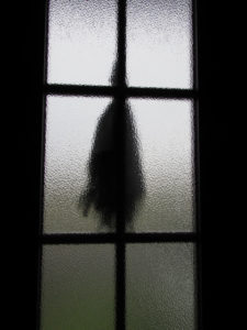 ガラス越しに眺める御神杉の後ろ姿