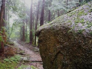 八鬼山登り口〜行き倒れ巡礼供養碑(熊野古道八鬼山道)