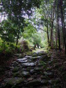 籠立場付近(熊野古道八鬼山道)