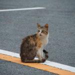 宇治橋前のロータリーにて出会った野良猫