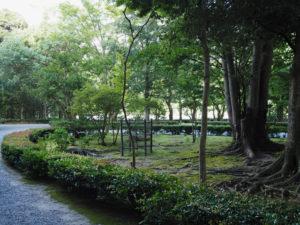 伊勢志摩サミットで記念植樹された「神宮スギ」の一本(内宮)