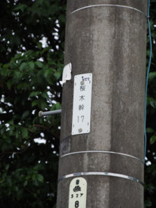 NTT電柱番号板[桜木幹17]