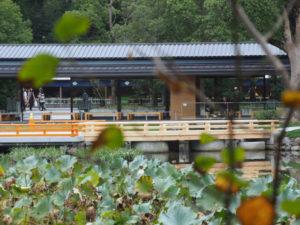 勾玉池越しに望むせんぐう館から奉納舞台への架け橋