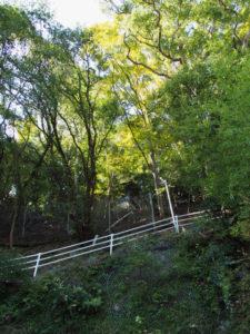鳥羽大庄屋かどやの土蔵跡から続く避難路