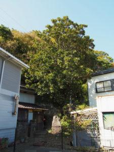 鳥羽大庄屋かどや付近から望む日渉園跡方向