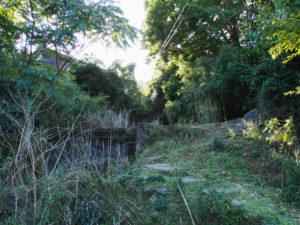 慈眼山 金胎寺付近から樋ノ山へ