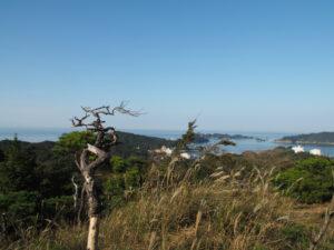 讃岐 金刀比羅宮鳥羽分社 拝殿付近から樋ノ山への山道にて
