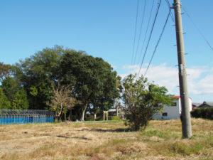 鳥居が造替された須賀神社の社叢(多気郡明和町行部)