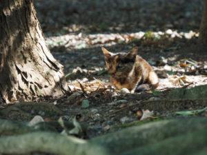 神服織機殿神社(皇大神宮 所管社)に迷い込んだ子猫