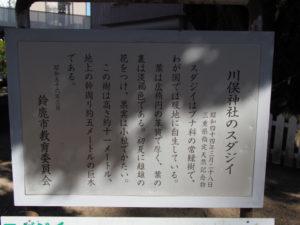 川俣神社のスダジイの説明板