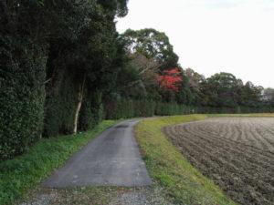 神服織機殿神社(皇大神宮 所管社)の社叢を取り巻く道