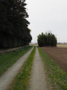 神服織機殿神社 北側の道