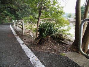 大晦日に巻き足された榊巻、松下社付近の池の畔(伊勢市二見町松下)