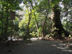 大津神社前の大楠付近(外宮)