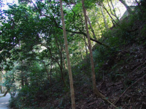 多賀宮背面の斜面