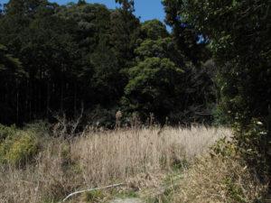 江神社の奥へと続く山(参)道