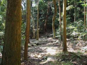 江神社の奥へと続く山(参)道の先には鳥居